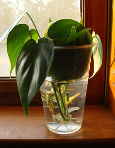 phil leaves
